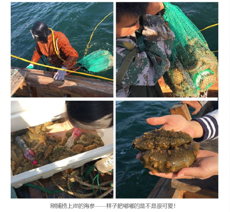 海参的价格是多少钱一斤?