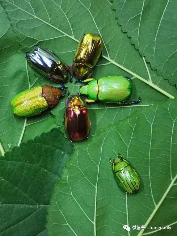世界昆虫科普展来长岛啦!
